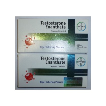 bayer testosterone enanthate 10x250mg1ml 10 amps